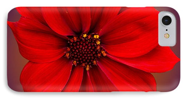 IPhone Case featuring the photograph Red Dahlia-bishop-of-llandaff by Brian Roscorla