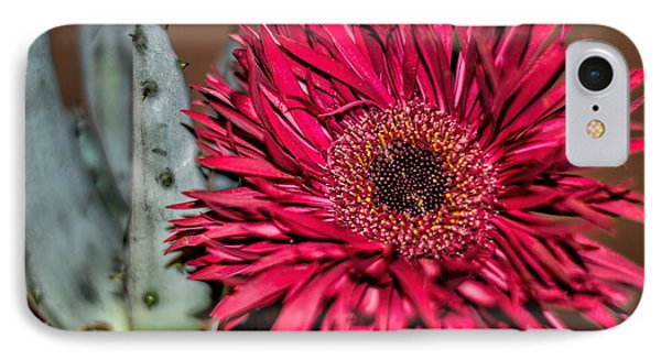 IPhone Case featuring the photograph Red Daisy And The Cactus by Diana Mary Sharpton