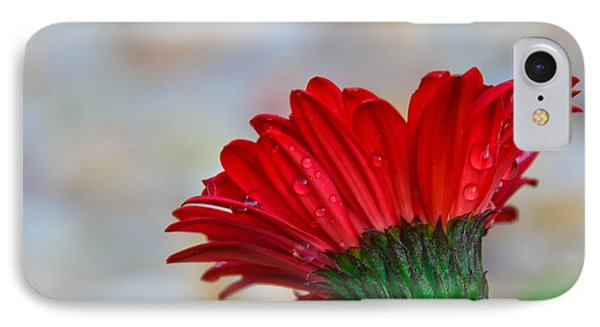 Red Daisy  IPhone Case by John Harding