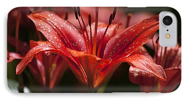 Red Day Lily 20120615_52a IPhone Case by Tina Hopkins