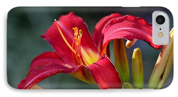 IPhone Case featuring the photograph Red Day Lily  by Irina Hays