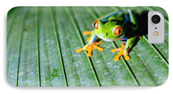 Red Eyed Frog Close Up IPhone Case