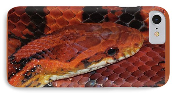 Red Eyed Snake IPhone Case