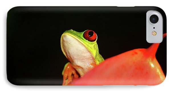 Red-eyed Tree-frog IPhone Case by Brian Magnier