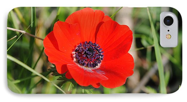 Red Anemone Coronaria 4 IPhone Case by Isam Awad