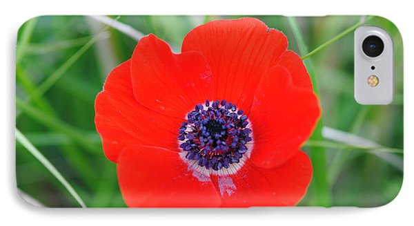 Red Anemone Coronaria 3 IPhone Case by Isam Awad