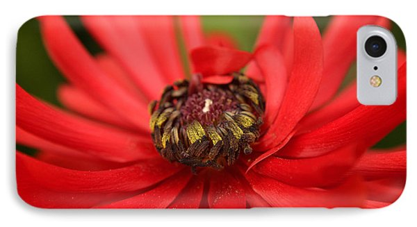 Red Flower IPhone Case by Ralph A  Ledergerber-Photography