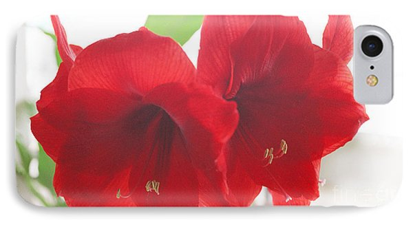 IPhone Case featuring the photograph Amaryllis by Rebecca Harman