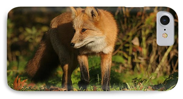 IPhone Case featuring the photograph Red Fox by Doris Potter