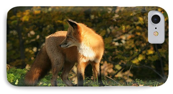 IPhone Case featuring the photograph Red Fox In Shadows by Doris Potter