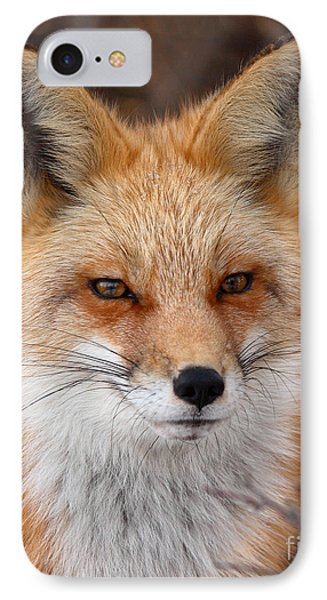 Red Fox In Winter Ruff Phone Case by Max Allen