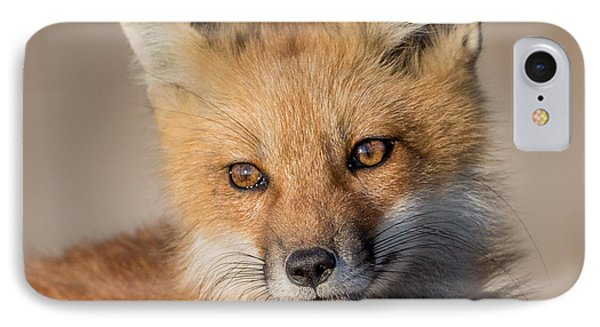 Red Fox Portrait IPhone Case by Bill Wakeley