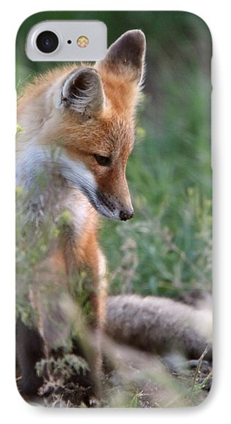Red Fox Pup Outside Its Den IPhone Case by Mark Duffy
