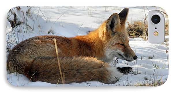 Red Fox Sleeping In The Snow Phone Case by Pierre Leclerc Photography
