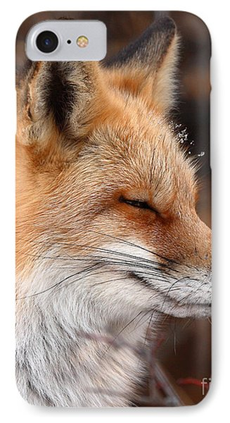 Red Fox With Ice Formed On Brow IPhone Case by Max Allen