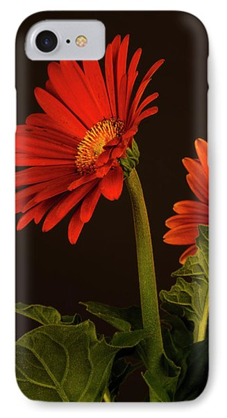 Red Gerbera Daisy 1 IPhone Case by Richard Rizzo