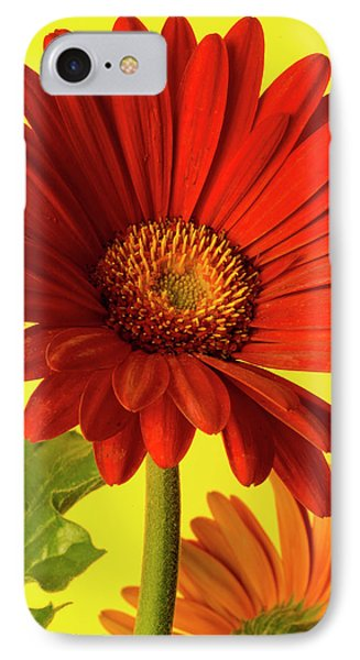 Red Gerbera Daisy 2 IPhone Case by Richard Rizzo