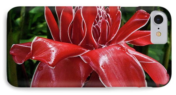 Red Ginger Lily Phone Case by Heiko Koehrer-Wagner