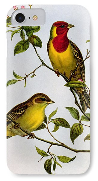 Red Headed Bunting IPhone 7 Case by John Gould
