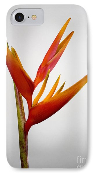 Red Heliconia Phone Case by Tomas del Amo - Printscapes