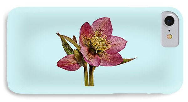 Red Hellebore Blue Background IPhone Case by Paul Gulliver