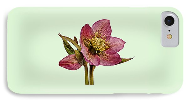 Red Hellebore Green Background IPhone Case by Paul Gulliver