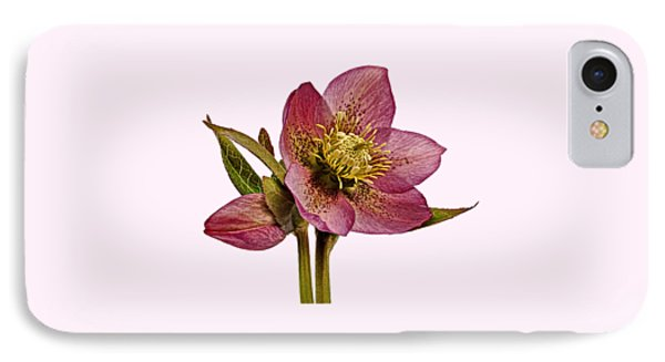 Red Hellebore Transparent Background IPhone Case by Paul Gulliver