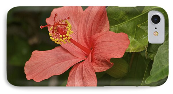 Red Hibiscus Phone Case by Michael Peychich