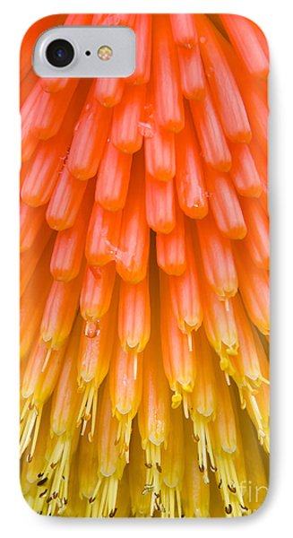 Red Hot Poker Flower Close Up IPhone Case