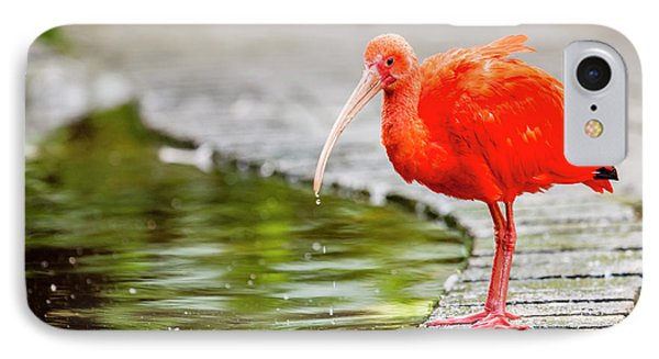 IPhone Case featuring the photograph Red Ibis by Alexey Stiop