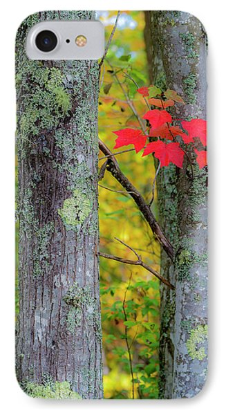 Red Leaves IPhone 7 Case