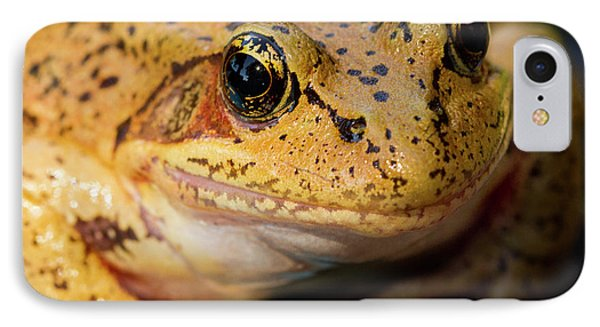 IPhone Case featuring the photograph Red Leg Frog by Jean Noren