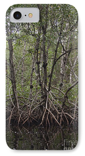 Red Mangrove Swamp, Florida IPhone Case