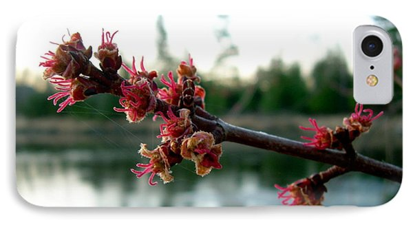 IPhone Case featuring the photograph Red Maple Buds At Dawn by Kent Lorentzen