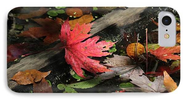 IPhone Case featuring the photograph Red Maple Leaf In Pond by Doris Potter