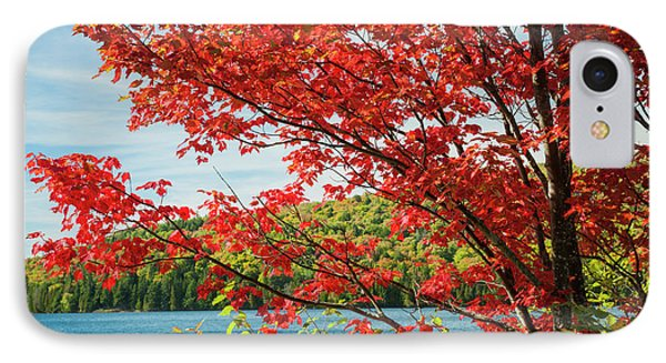 IPhone Case featuring the photograph Red Maple On Lake Shore by Elena Elisseeva