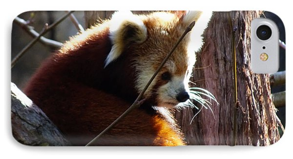 IPhone Case featuring the photograph Red Panda by Angela DeFrias