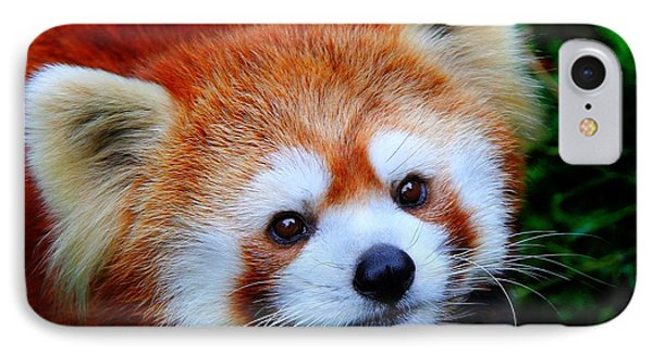IPhone Case featuring the photograph Red Panda by Davandra Cribbie