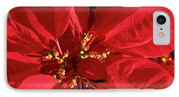 Red Poinsettia Macro IPhone Case by Sally Weigand