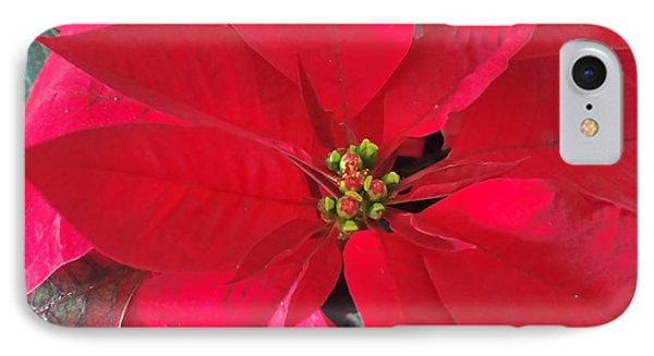 Red Poinsettia IPhone Case by Pamela Walton