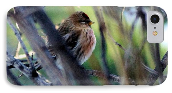 Red Poll, Resting IPhone Case