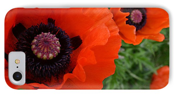 Red Poppies Phone Case by Lynne Guimond Sabean