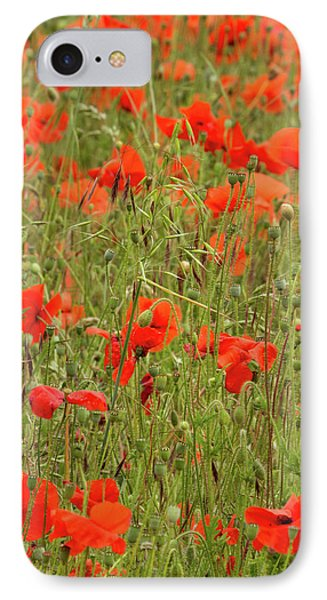Red Poppies Phone Case by Wayne Molyneux