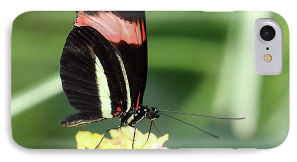 Red Postman Butterfly Heliconius Erato Cyrbia IPhone Case by Paul Cowan