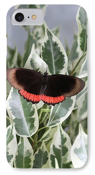 Red Rim Butterfly IPhone Case