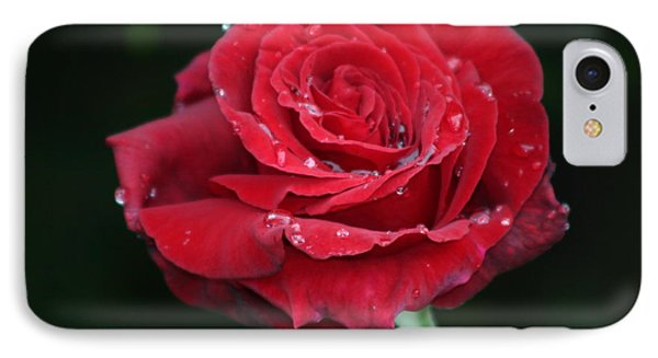 Red Rose IPhone Case by Martina Fagan