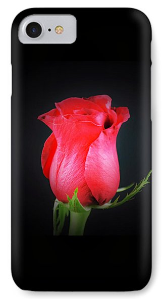 Red Rose Shows Love  IPhone Case by Ray Shrewsberry