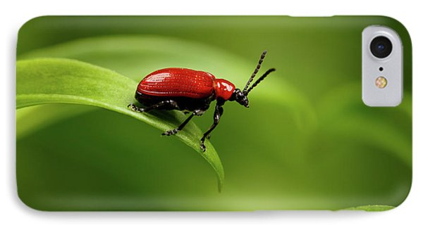 Red Scarlet Lily Beetle On Plant IPhone Case by Sergey Taran