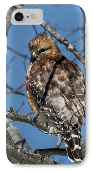 IPhone 7 Case featuring the photograph Red Shouldered Hawk 2017 by Bill Wakeley