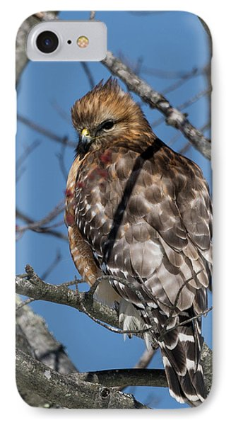 IPhone Case featuring the photograph Red Shouldered Hawk 2017 by Bill Wakeley